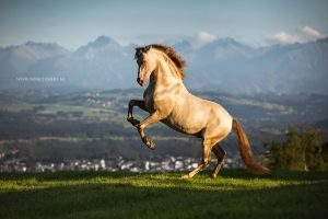 Paardenfoto met actie, foto in galop
