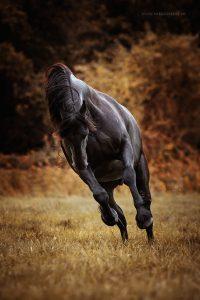 Voorbeeld paardenfotografie