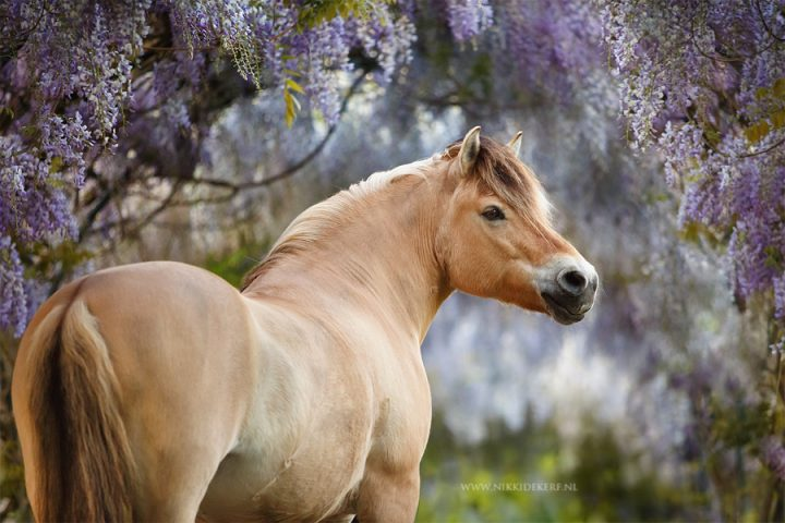 Paarden fotoshoot tips: de aandacht trekken van een paard