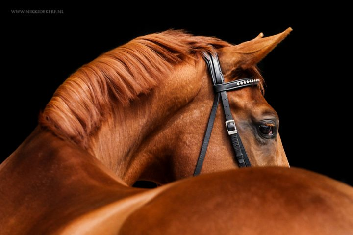 Kijk blij, of anders… (de aandacht trekken van een paard)