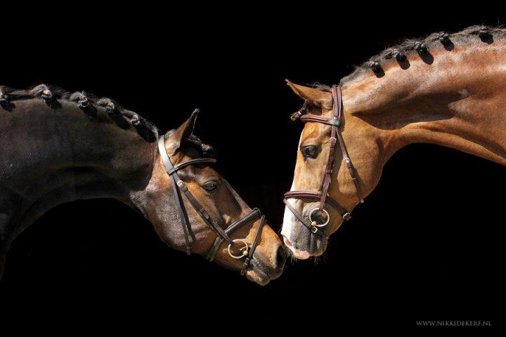 [Tutorial] Blackfoto van een paard maken