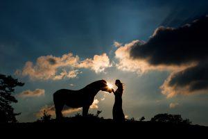 Foto met paard in silhouette vorm