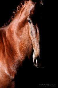 Fine art paardenfotografie kunst