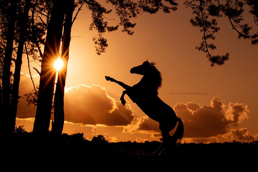 Voorbeeld fotoshoots met paard- steigerend paard bij zonsondergang