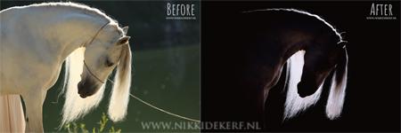 Voorbeeld voor workshop nabewerking fine-art paardenfoto met natuurlijk licht